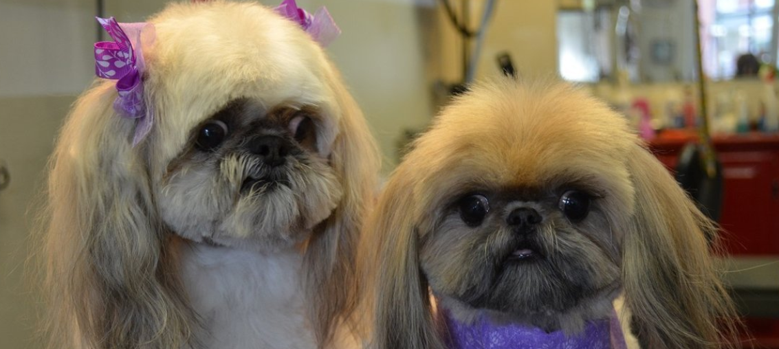Vermont's Top Rated Local® Pet Groomers Award Winner: Pet Spa & Grooming