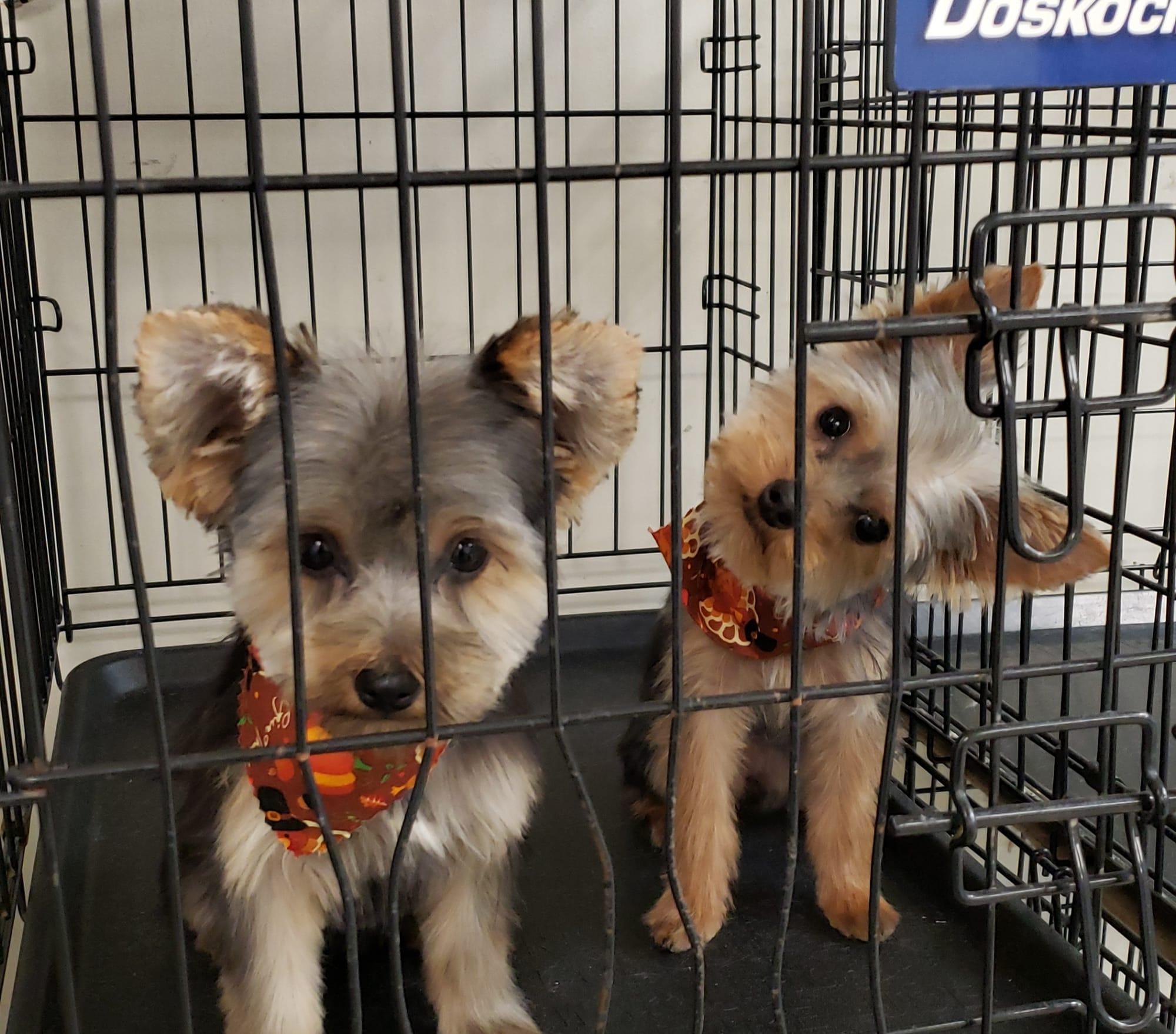 West Virginia's Top Rated Local® Pet Groomers Award Winner: Gina's Pet Grooming
